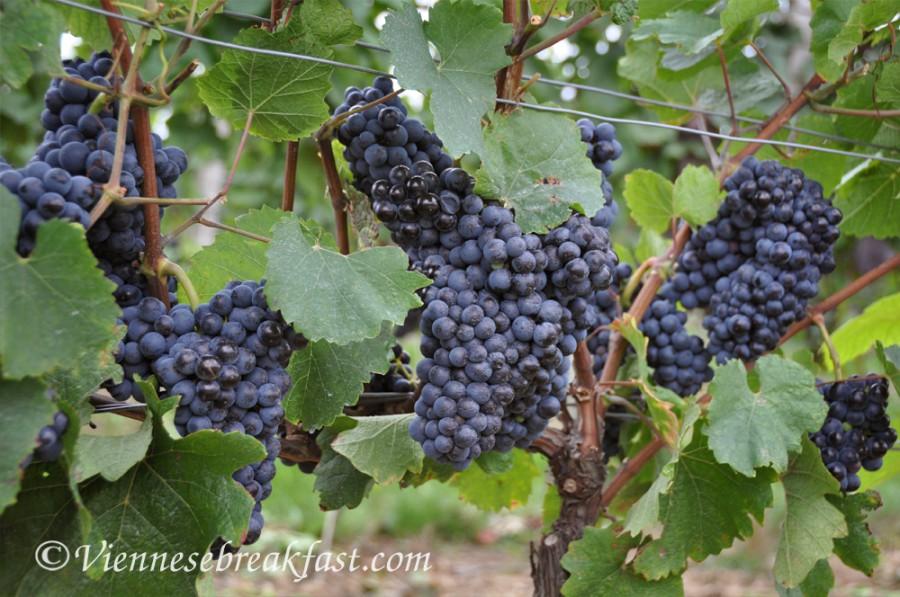 winnice12