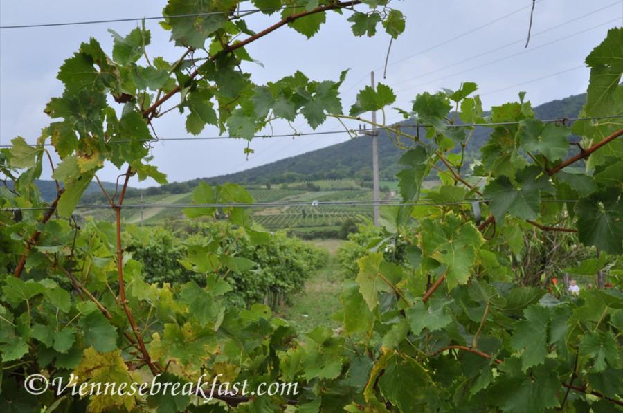 winnice17