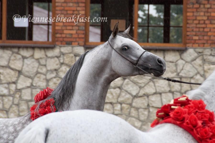 konie-a-7