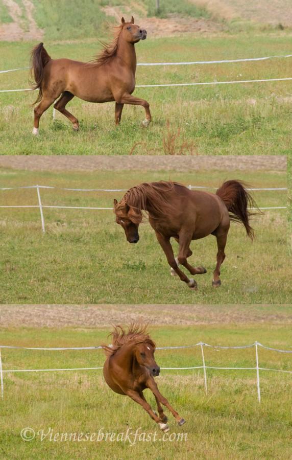 konie-a14