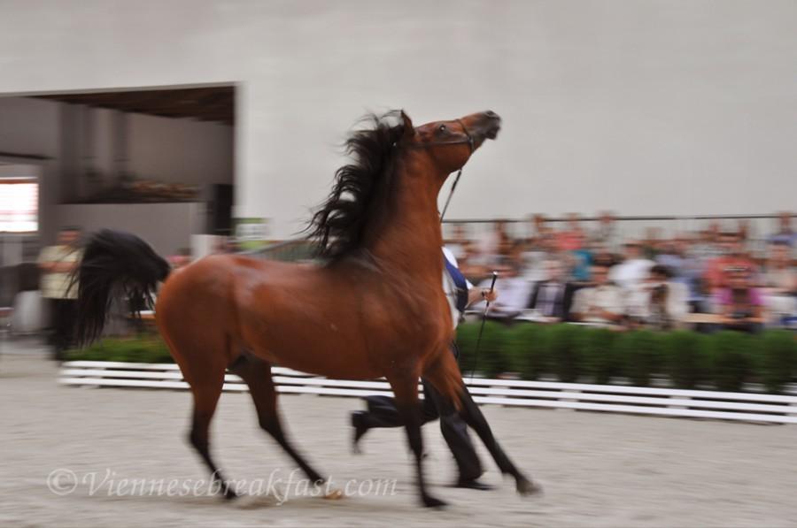 konie-a19