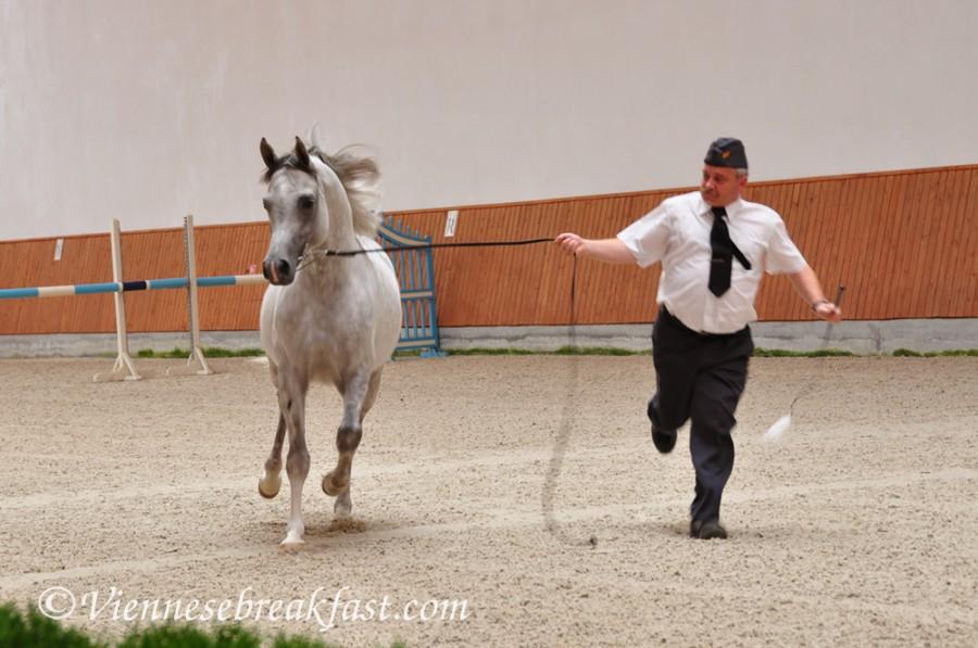 konie-a2