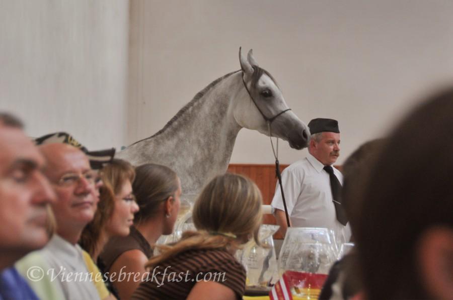 konie-a23