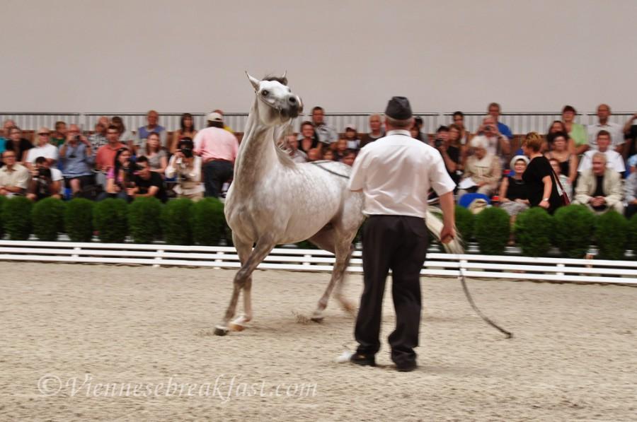 konie-a25