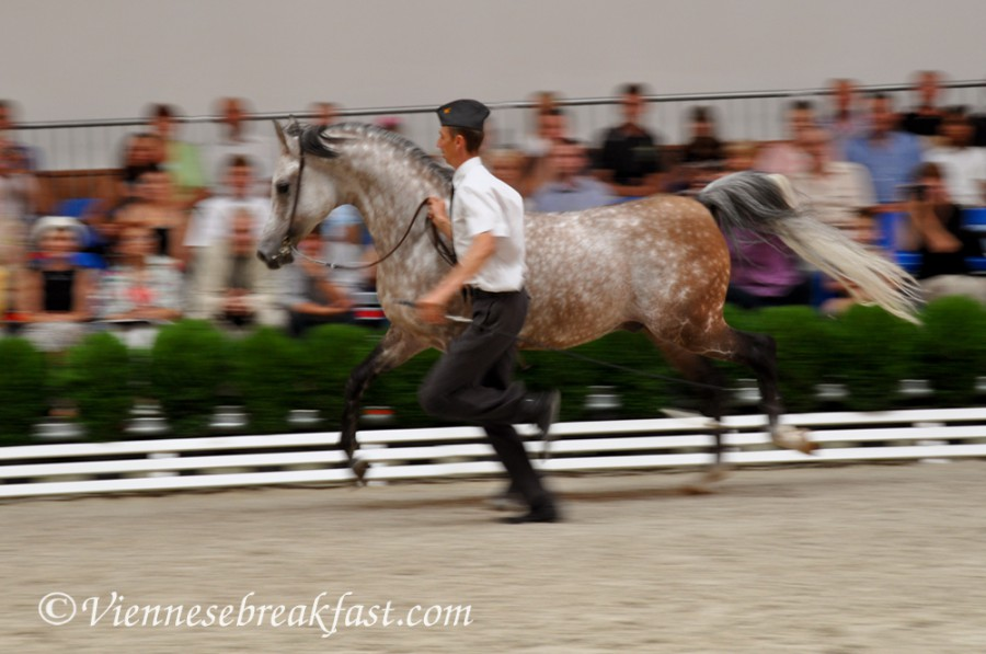 konie-a6