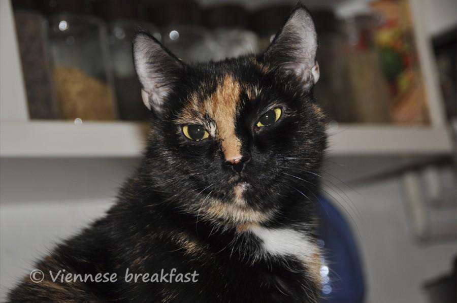 viennese-breakfast-kota luty6