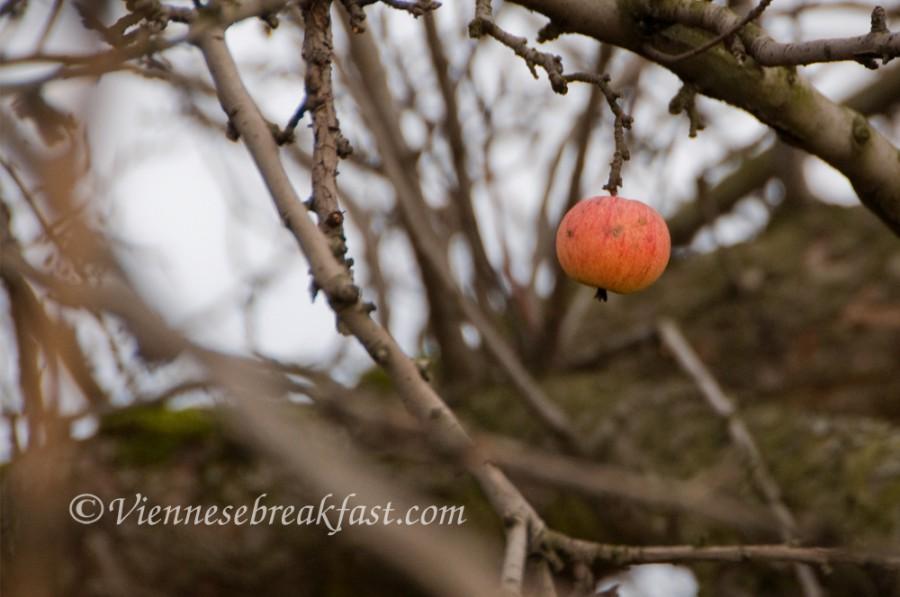 jablko-a4