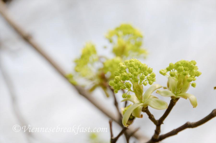 wiosna-drzew-2
