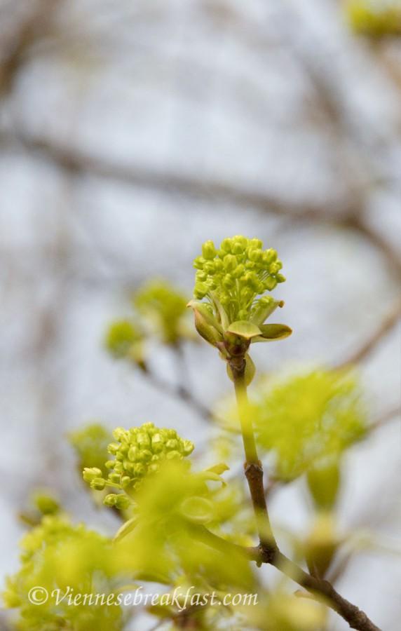 wiosna-drzew