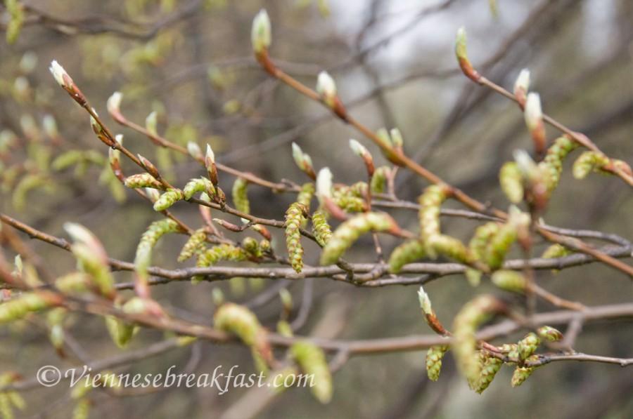 wiosna-paki