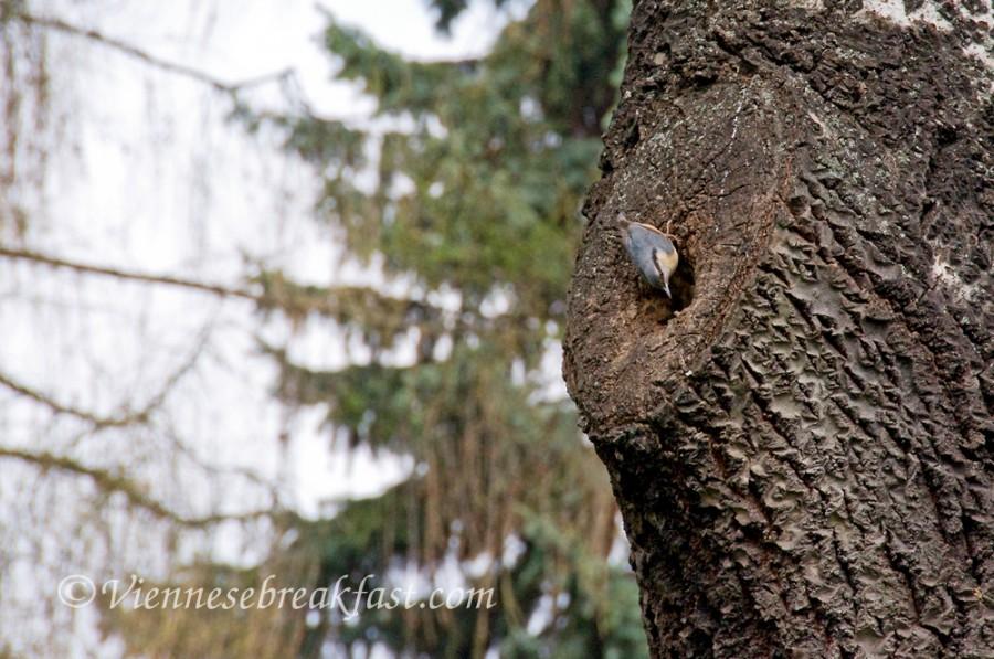 wiosna-ptaki