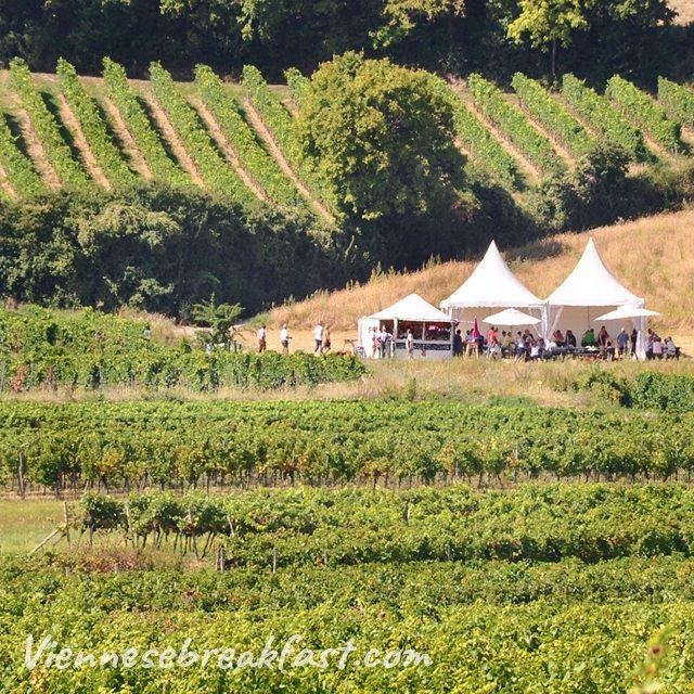 Winnice  kocham austria sterreich myaustria winnice vineyard