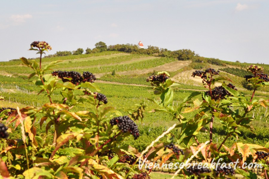 winnice-austria-2