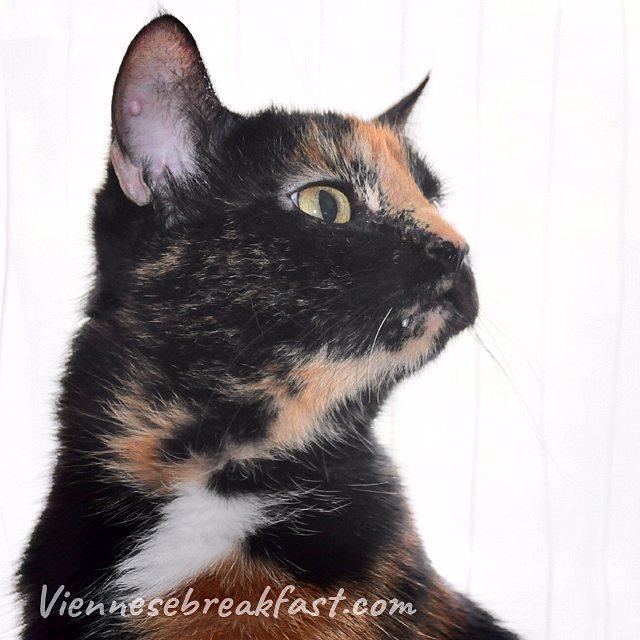Co tu zbroi? koty koty katze katzen cats catlovers katzenladyhellip