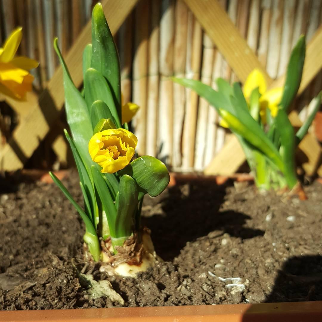 W ogrdku wiosna wiosna jestmoc sparing frhling grn green zielonohellip