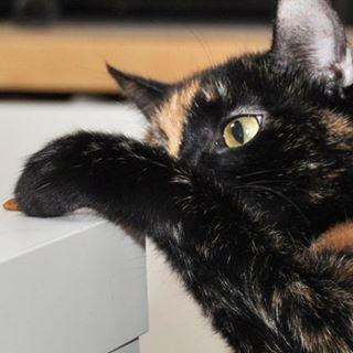Dobrego weekendu! Na blogu nieco refleksji wpis weekend koty katzehellip
