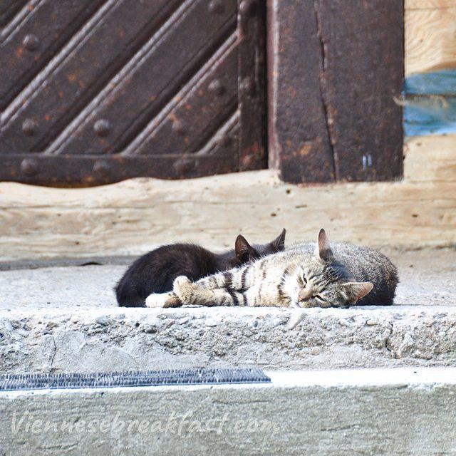 Dobrej niedzieli Na focie kotu z Tyca niedziela sonntag sundayhellip