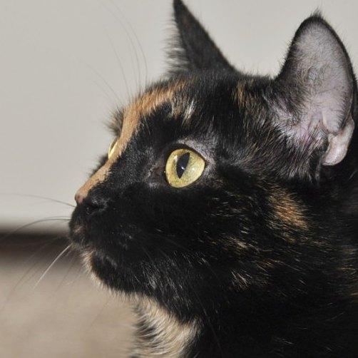 Dla mojej Koty muchy to fascynujce stworzenia kot cat catshellip