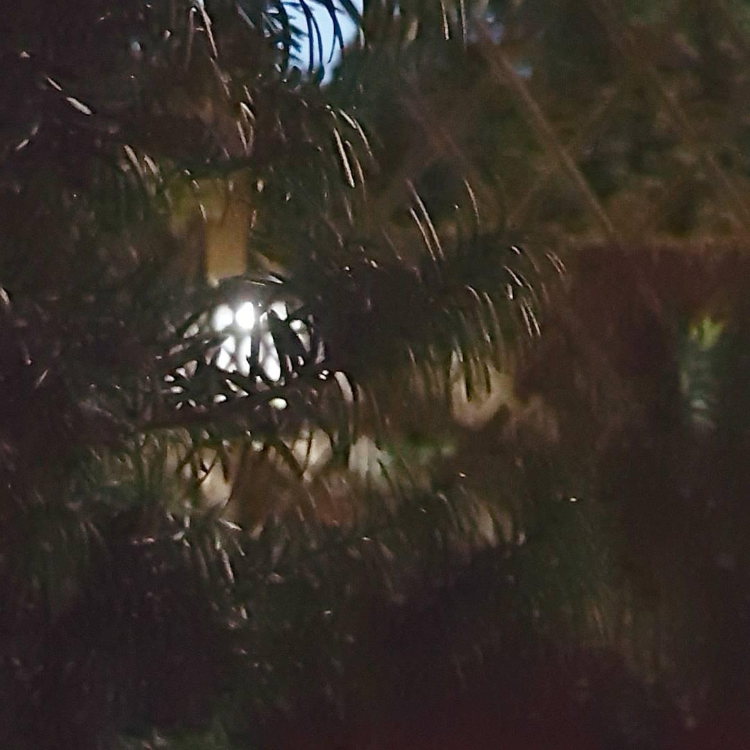 Wreszcie przyjemne 30 C Dobrej nocy nam wszystkim garden ogrdhellip