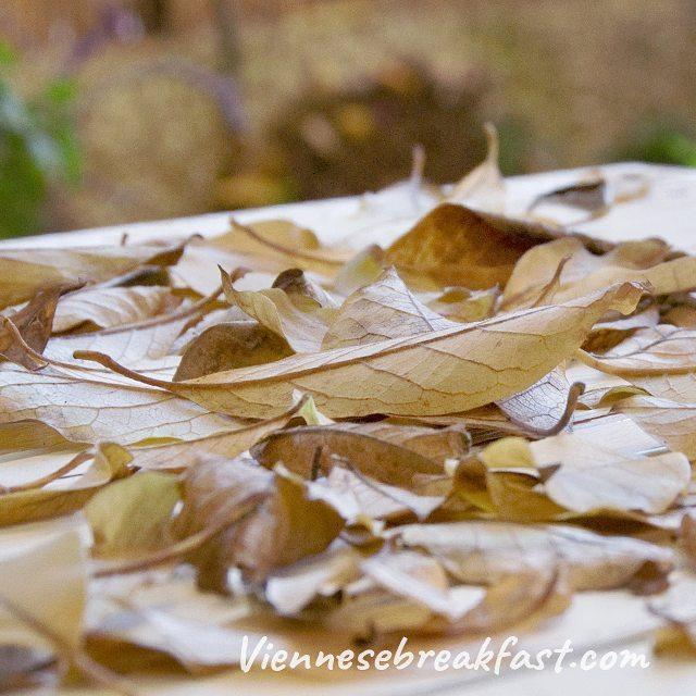 I nadesza jesie jesien carpediem autumn herbst lubiejesien ogrd garden