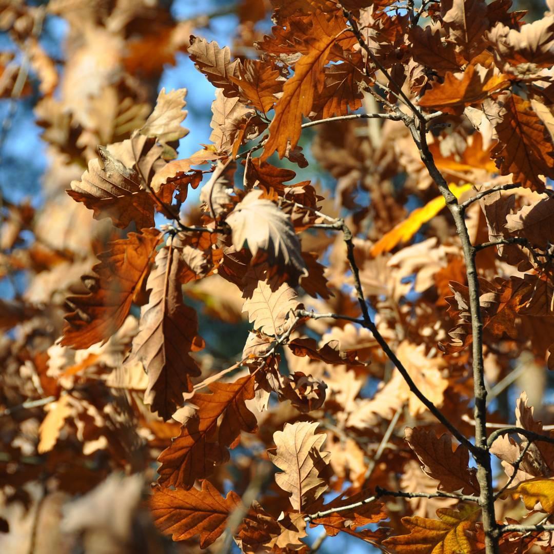 Ruda jesie Cudo! jesie autumn herbst rudo carpediem liscie lecliciezdrzewhellip