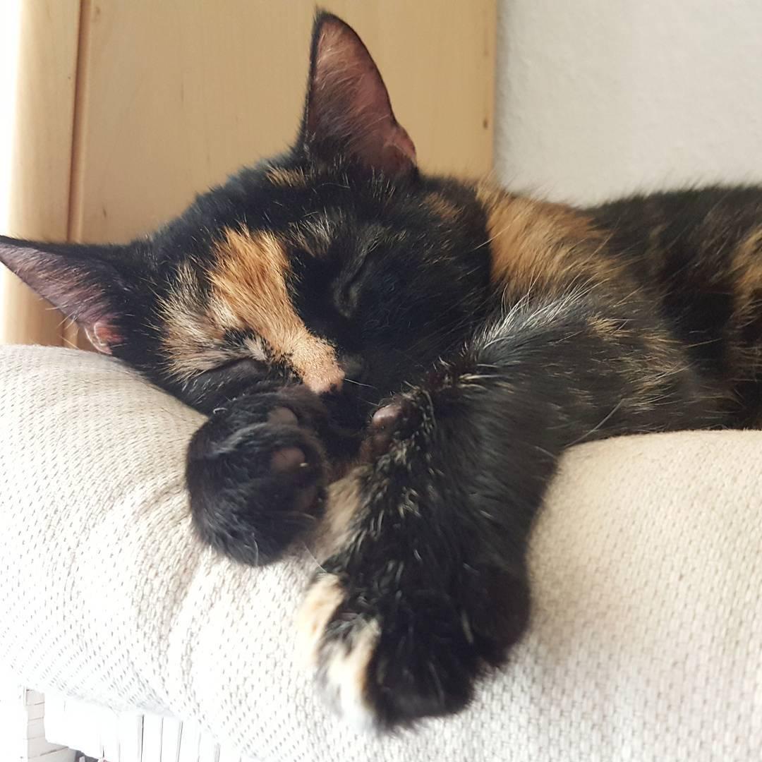 Cicho wszdzie Dobranoc dobranoc goodnight gutenacht koty katze chata catslifehellip